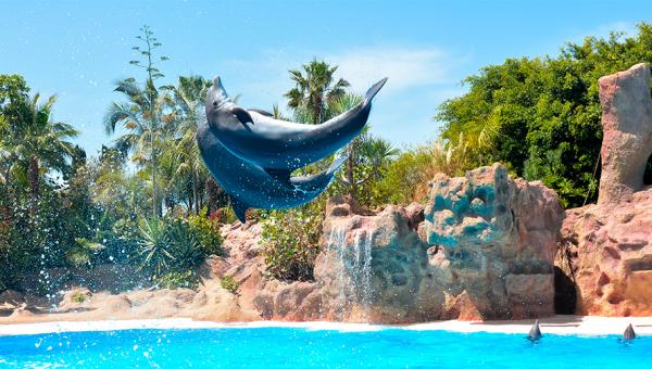 Loro Park espectaculo delfines